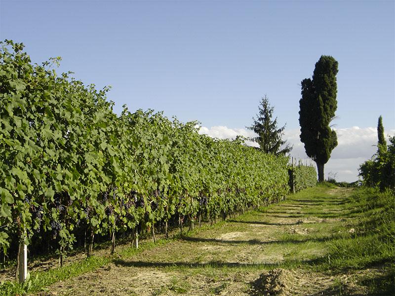 cantina santa croce territorio vino